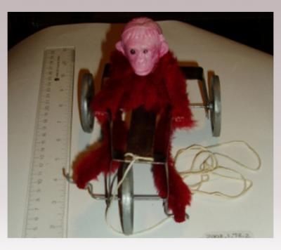 Hanni Sager Fur Monkey on Tricycle